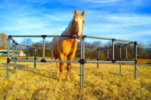 Portable Horse Fence